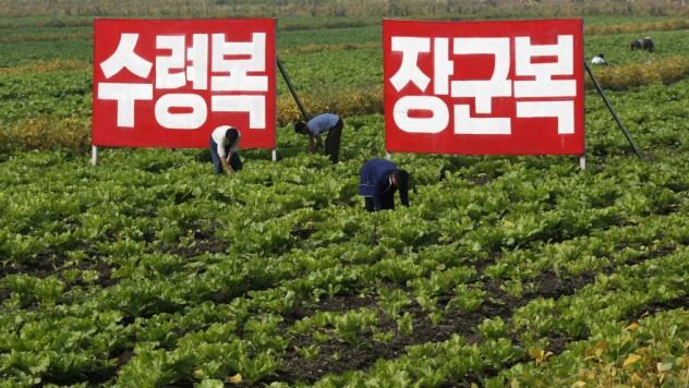 Ngành nông nghiệp Hàn Quốc đang phải đối mặt với tình trạng thiếu phân bón trầm trọng.