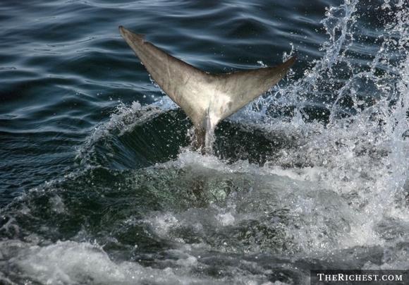 người và cá mập 3