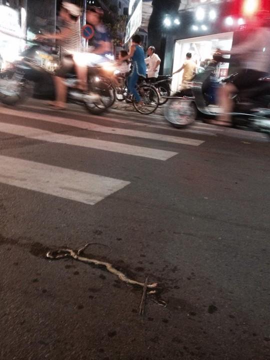 Một con rắn lục đuôi đỏ được người dân giết chết tại quận 5 (TP HCM). Ảnh: Lê Phong