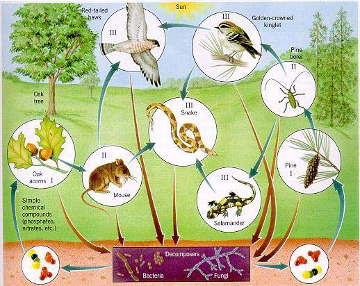Côn trùng là một thành phần quan trọng trong chuỗi thức ăn
