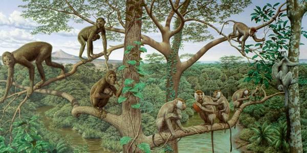 Loài linh trưởng thời kỳ cổ đại (Ảnh minh họa)