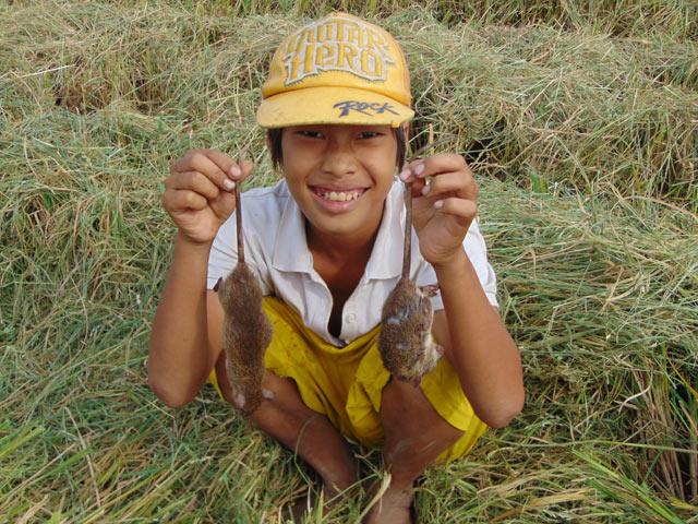 Không chỉ người lớn mà cả trẻ em cũng có thể tham gia săn chuột đồng.