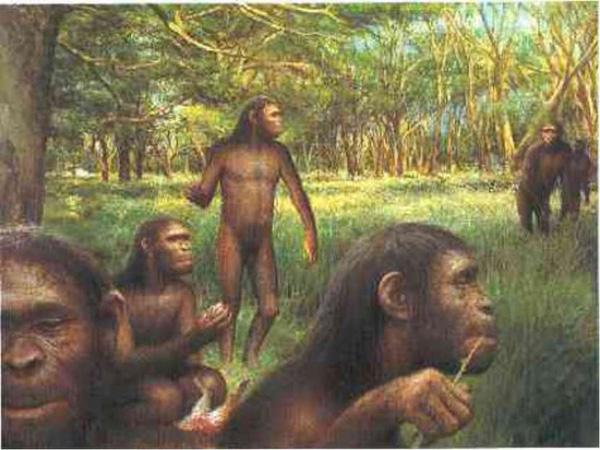 Tổ tiên loài người thời kỳ mới xuất hiện. Thức ăn chủ yếu của họ chỉ là quả và lá cây.