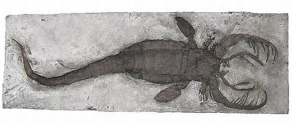 top 10 động vật thời tiền sử quái ác nhất dưới biển 11