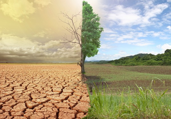 Biến đổi khí hậu là hệ quả không thể tránh khỏi nếu côn trùng biến mất