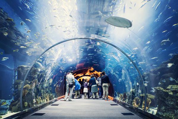 Khu thủy cung với vô số loài cá biển kỳ lạ.