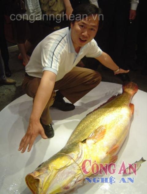Tiến sĩ Nguyễn Đức Cự, người có nhiều năm nghiên cứu để ra đời đề tài khoa học về loài cá quý hiếm này thông tin trên VOV Giao thông: Đây là loài cá có giá trị kinh tế đặc biệt cao, giá trị thương mại trước năm 2005 tại Việt Nam dao động trong khoảng 5- 7 triệu đồng /kg (300 - 400USD/kg) và năm 2007 khoảng 15 – 20 triệu đồng/kg.(Ảnh: Công an Nghệ An)