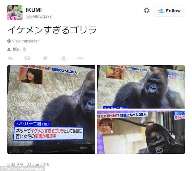 """Shabani trở nên nổi tiếng nhanh chóng nhờ mạng xã hội Twitter sau khi những người hâm mộ đăng ảnh chú khỉ đột mà họ cho là """"rất điển trai""""."""