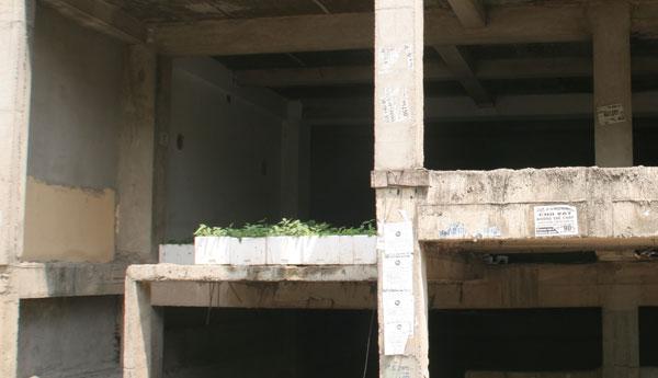 tầng hầm, hầm chung cư, ao nuôi cá, tầng hầm chung cư, dự án bỏ hoang, chung-cư, dự-án, tòa-nhà-bỏ-hoang, khu-đô-thị, tầng-hầm, tầng-hầm-chung-cư