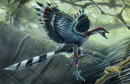 Loài chim Archaeopteryx