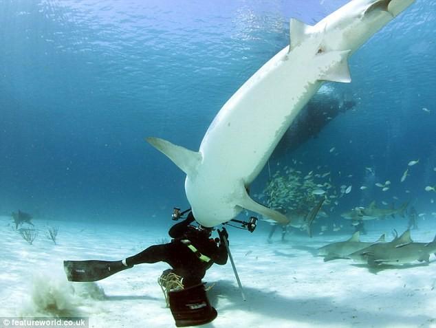 nếu bơi xa bờ mà gặp cá mập, bạn đừng mong hi vọng sống sót. Thay vào đó, hãy bơi gần bờ, không quá 15 m
