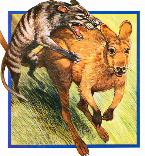 Chúng săn bắt các con vật khác để ăn
