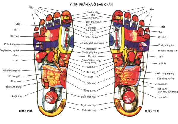Vị trí trên bàn chân có liên quan đến các cơ quan khác trên cơ thể.