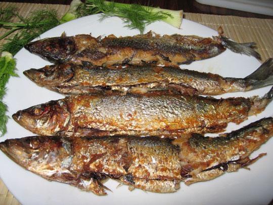 Ăn cá trích khi đói làm tăng nguy cơ mắc bệnh gout