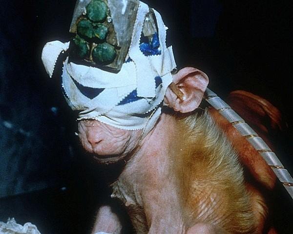 Chú khỉ may mắn sống sót sau thí nghiệm