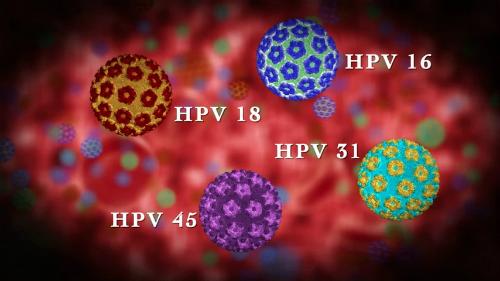 4 chủng HPV gây nên sùi mào gà ở người