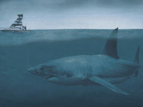 quái vật biển Megalodon. Ảnh minh họa