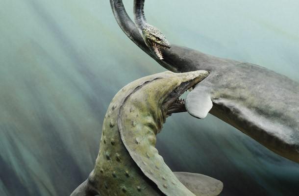 Maui Reptile - Đây là loài bò sát biển hung dữ nhất và có đầu lớn nhất từng tồn tại trên Trái Đất. Chúng có chiều dài hơn 20 m và nặng khoảng 8 tấn.
