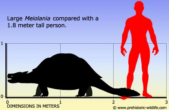 kích thước so với con người