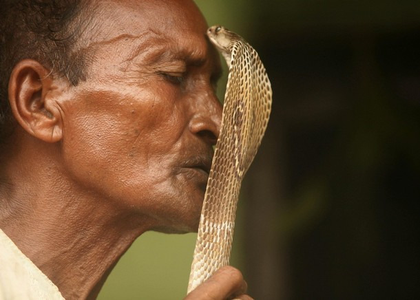 Người Ấn Độ tôn thờ rắn hổ mang như linh thú