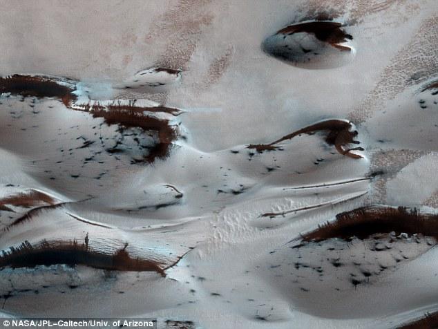 Cận cảnh những đám cây trên sao Hỏa