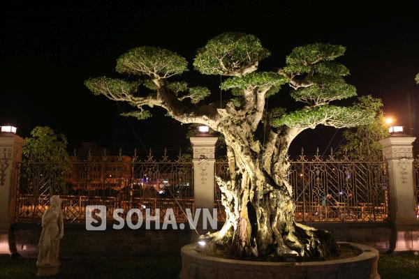 Có nhiều cây được trồng trong khuôn viên gia đình hoàng tộc, vua chúa.