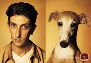 Sự giống nhau kì lạ giữa chủ và vật nuôi