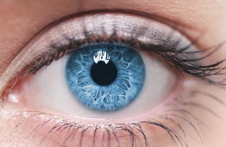 Mắt người giúp lựa chọn con vật hay đồ vật phù hợp cho chúng ta nhất.