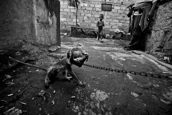 Hình ảnh chú khỉ đeo mặt nạ khiến nhiếp ảnh gia Ed Wray hoảng hốt khi lần đầu bắt gặp.