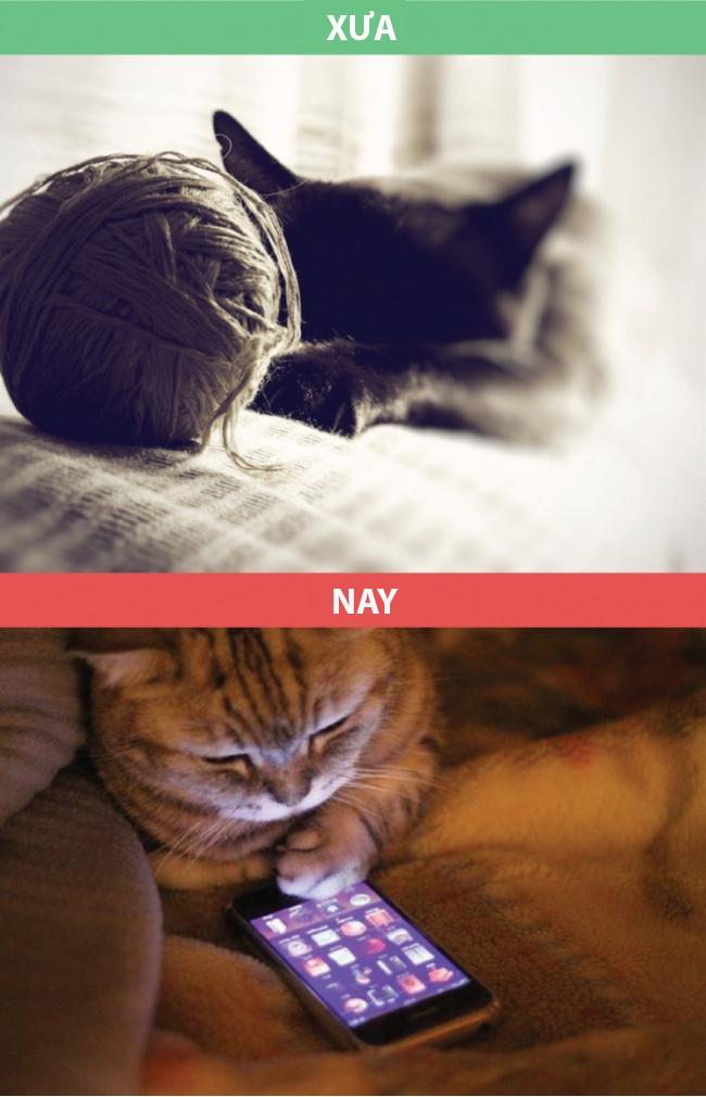 Từ những chú mèo