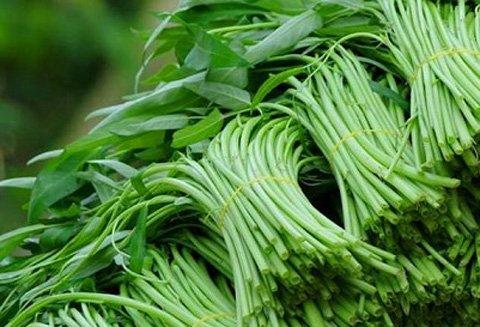 GS Lân Dũng giật mình khi rau xanh thường xuyên được bón đạm và phun thuốc trừ sâu.