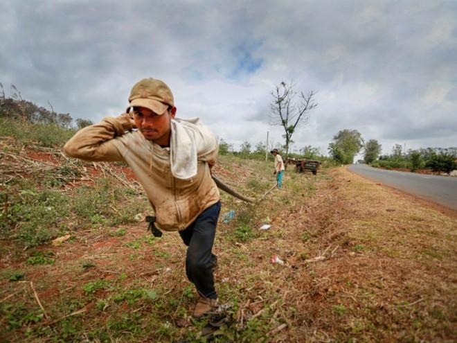 Người dân ở thị trấn Krông Năng, Đắk Lắk kéo ống nước nối dài hơn 200 m dẫn nước từ suối lên rẫy cứu vườn cà phê đang xơ xác, tiêu điều. Ảnh: Tiến Thành/Tuổi trẻ