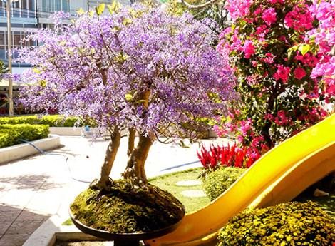 Chủ nhân của cây mai lạ và nhóm thanh niên trẻ đưa cây từ Đà Lạt đến Nha Trang tham gia hội hoa xuân.