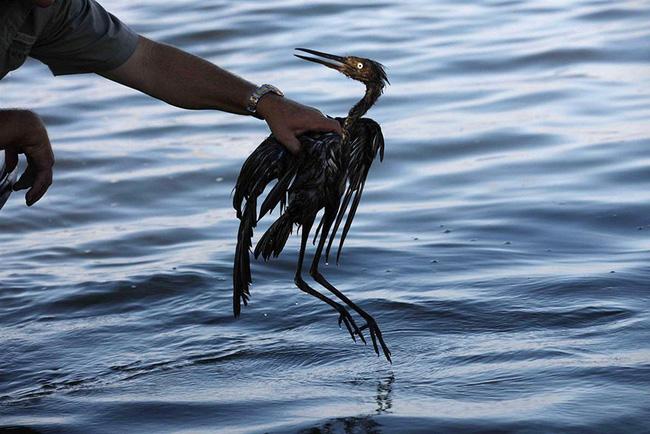 Loạt ảnh chấn động cho thấy đại dương đang trở thành hố rác khổng lồ của nhân loại - Ảnh 11.
