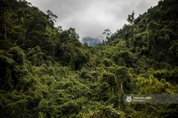 Khung cảnh trầm mặc, bí ẩn của rừng cây bên đèo.