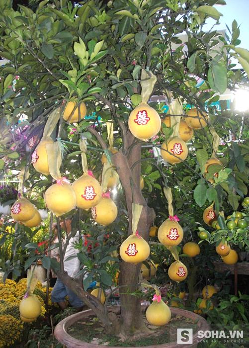 Tại một cửa hàng hoa ở đường Thành Thái (quận 10), loại cây cây bưởi da vàng được nhiều người chú ý vì lạ mắt. Chủ hàng cho biết đây là loại bưởi từ ngoài bắc đưa vào, trái cây hoặc có tự nhiên hoặc được ghép vào.