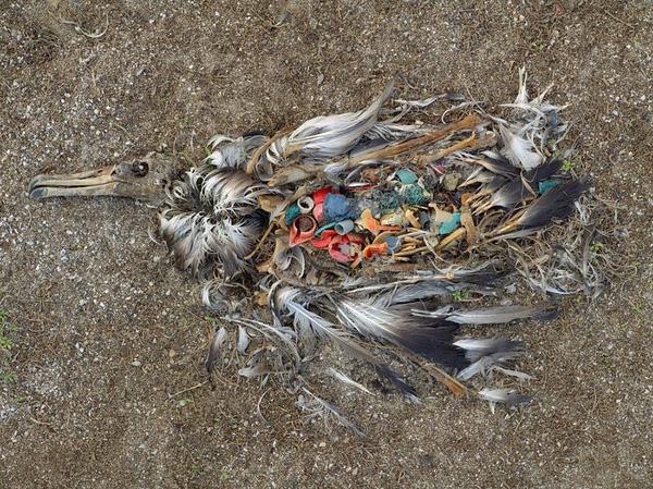 Bức ảnh đã quá quen thuộc cho thấy hình hình ô nhiễm môi trường nghiêm trọng trên toàn thế giới.