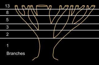 Quy luật phát triển của thực vật tuân theo tỉ lệ vàng
