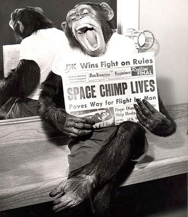Một chú tinh tinh sung sướng chụp hình sau khi thực hiện chuyến bay vào không gian thành công năm 1961