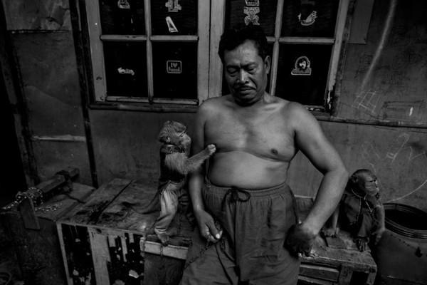 Người huấn luyện khỉ Madi đang ngồi cùng hai chú khỉ của mình trong căn nhà tại làng nuôi dạy khỉ nằm trong thành phố Jakarta, Indonesia.