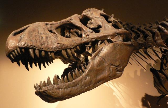 Tuy nhiên trên thực tế các loài khủng long đã bắt đầu tuyệt chủng từ trước khi thảm họa thiên thạch xảy ra.