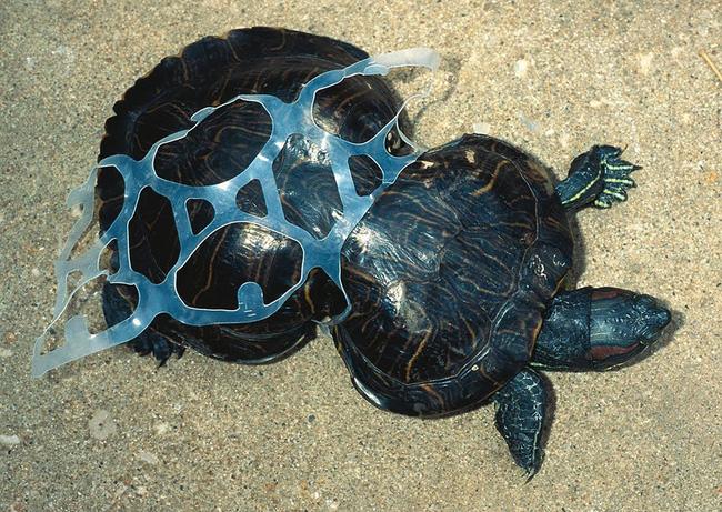 Loạt ảnh chấn động cho thấy đại dương đang trở thành hố rác khổng lồ của nhân loại - Ảnh 20.