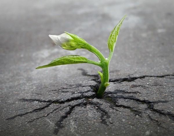 Khó khăn sẽ khiến bạn mạnh mẽ hơn (Nguồn: Internet)