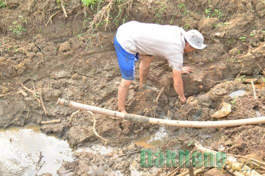 Người dân xã Đắk Nông tìm nước chống hạn cho cà phê. Ảnh: Báo Đắk Nông