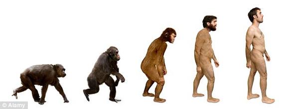 Palmaris longus là bằng chứng cho thấy chúng ta tiến hóa từ động vật leo trèo