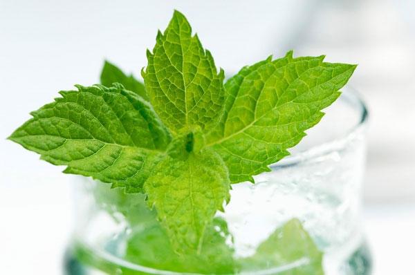 Dầu cây trà và tinh dầu bạc hà cũng có thể được thêm vào nước và dùng súc miệng hàng ngày giúp tiêu diệt vi khuẩn và cho bạn hơi thở thơm tho.
