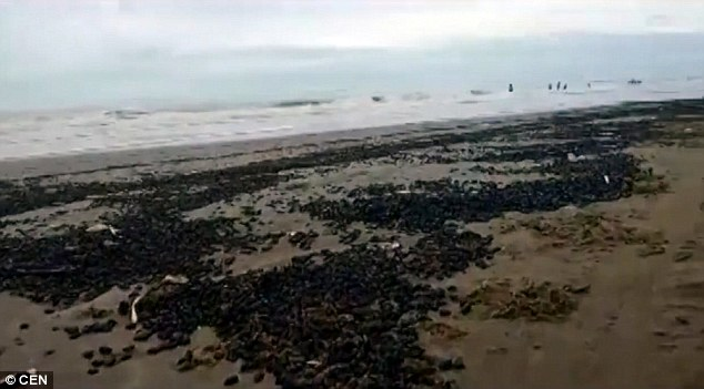 Từng đám bọ đen trên bờ biển.