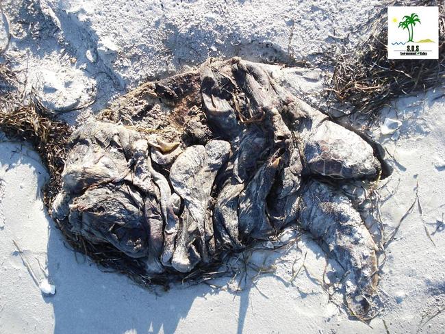 Loạt ảnh chấn động cho thấy đại dương đang trở thành hố rác khổng lồ của nhân loại - Ảnh 34.