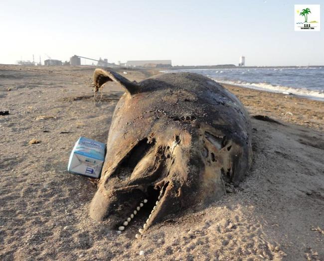 Loạt ảnh chấn động cho thấy đại dương đang trở thành hố rác khổng lồ của nhân loại - Ảnh 35.