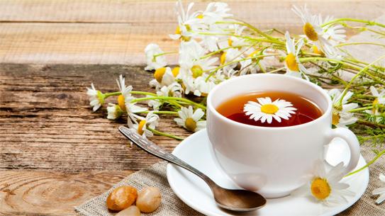 Bài thuốc chữa loét miệng hiệu quả từ Trà hoa cúc